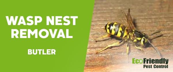 Wasp Nest Remvoal Butler