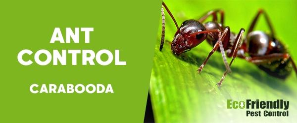 Ant Control Carabooda