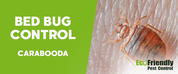 Bed Bug Control Carabooda