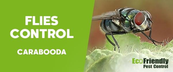 Flies Control Carabooda