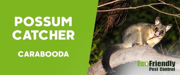 Possum Catcher Carabooda