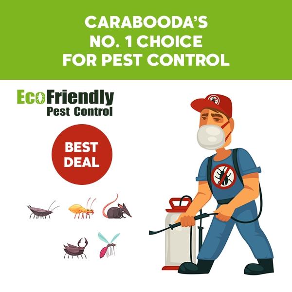 Pest Control Carabooda