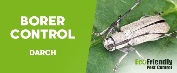 Borer Control Darch
