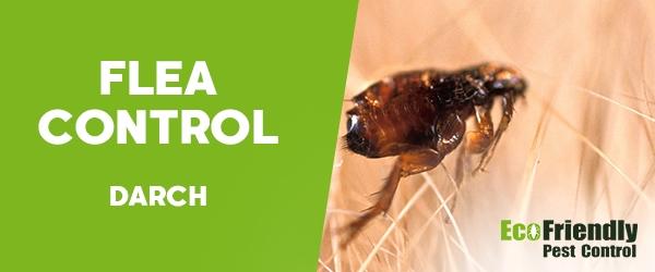 Fleas Control Darch