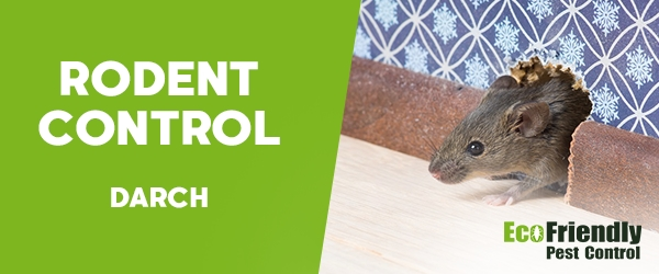Rodent Treatment Darch