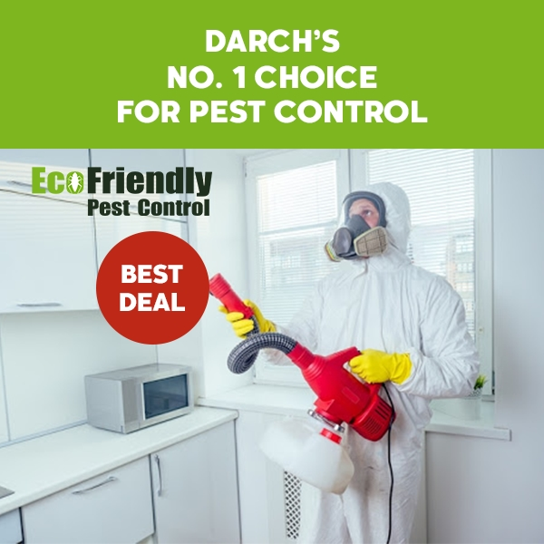 Pest Control Darch