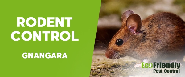 Rodent Treatment  Gnangara