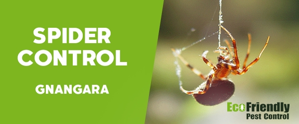 Spider Control  Gnangara