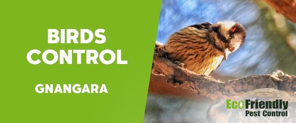 Birds Control  Gnangara