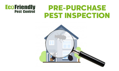 Pre-purchase Termite Inspection  Jindalee