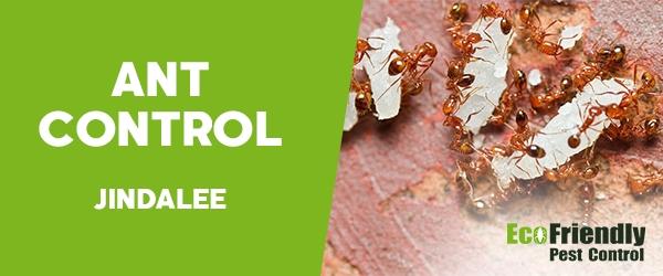 Ant Control  Jindalee