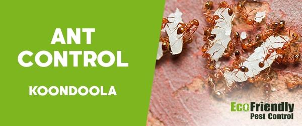 Ant Control Koondoola
