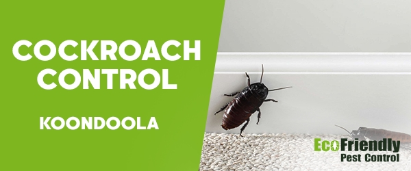 Cockroach Control Koondoola