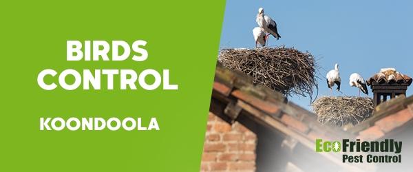 Birds Control Koondoola
