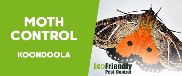 Moth Control Koondoola
