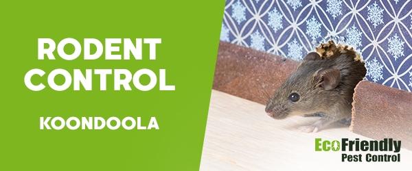 Rodent Treatment Koondoola