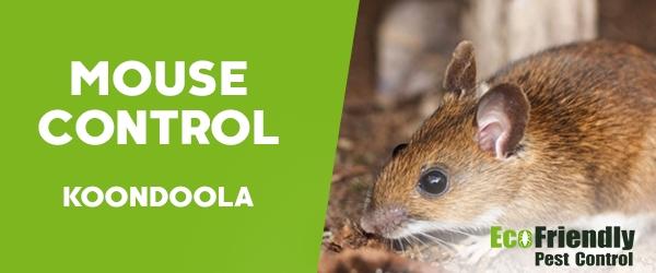 Mouse Control Koondoola