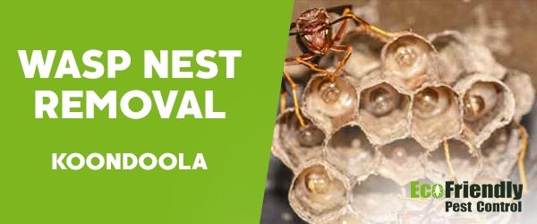 Wasp Nest Remvoal Koondoola