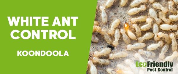 White Ant Control Koondoola