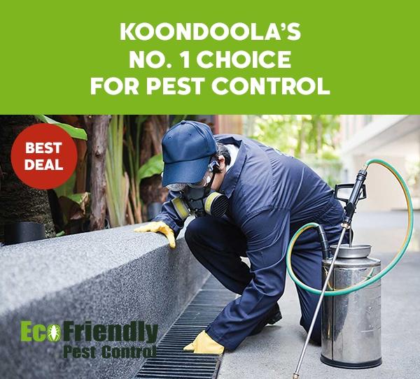 Pest Control Koondoola