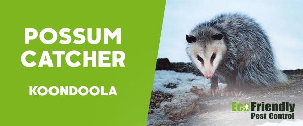 Possum Catcher Koondoola