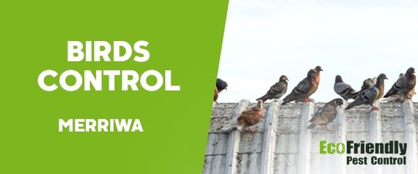 Birds Control Merriwa