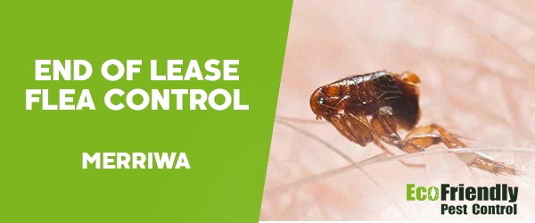 End of Lease Flea Control Merriwa