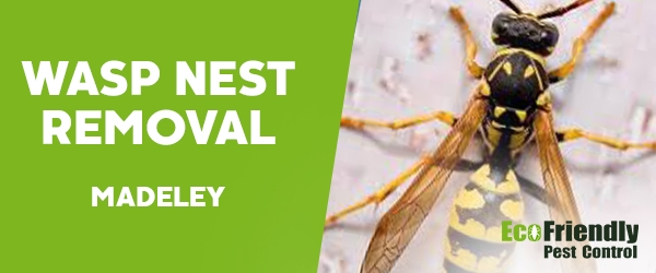 Wasp Nest Remvoal Madeley