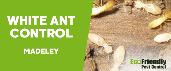 White Ant Control Madeley