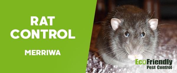 Rat Pest Control Merriwa
