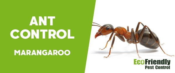 Ant Control Marangaroo