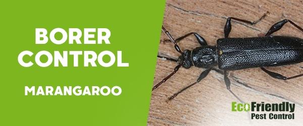 Borer Control Marangaroo
