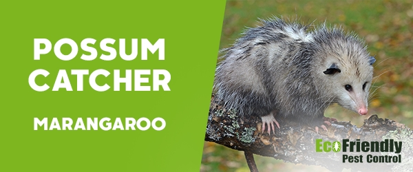 Possum Catcher Marangaroo