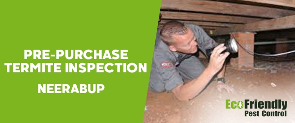 Pre-purchase Termite Inspection Neerabup