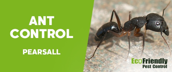 Ant Control Pearsall