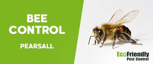 Bee Control Pearsall