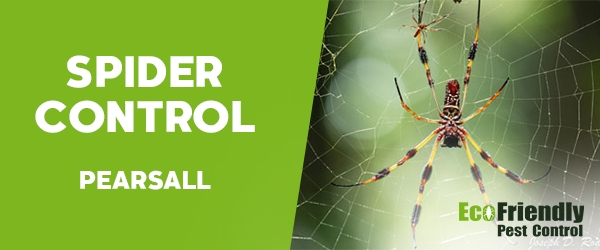 Spider Control Pearsall