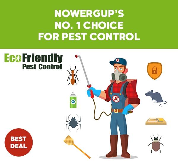 Pest Control Nowergup