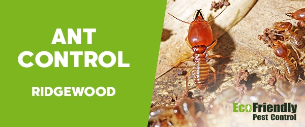 Ant Control Ridgewood