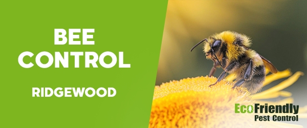 Bee Control Ridgewood