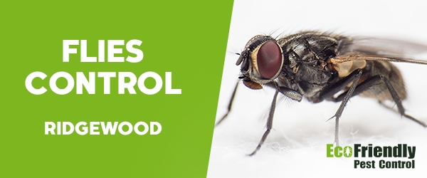Flies Control Ridgewood