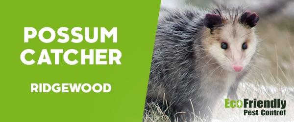 Possum Catcher Ridgewood