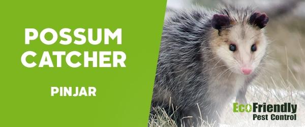 Possum Catcher  Pinjar