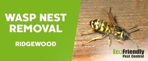 Wasp Nest Remvoal Ridgewood