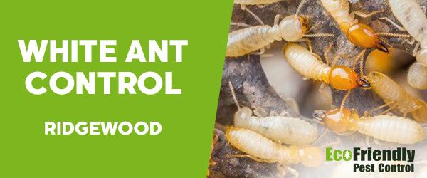White Ant Control Ridgewood