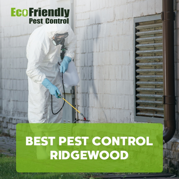 Best Pest Control Ridgewood