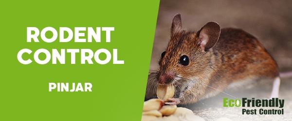 Rodent Treatment  Pinjar