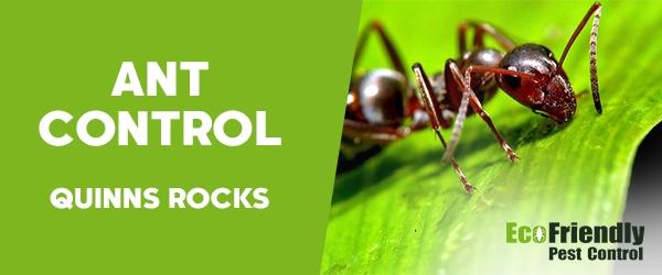Ant Control Quinns Rocks