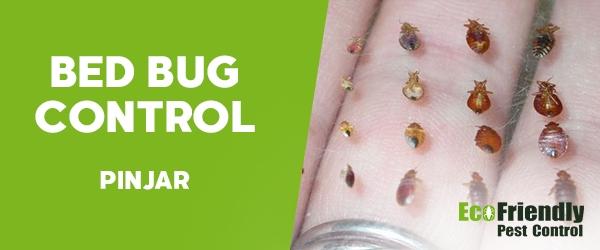 Bed Bug Control  Pinjar