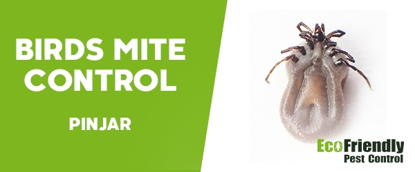 Bird Mite Control  Pinjar